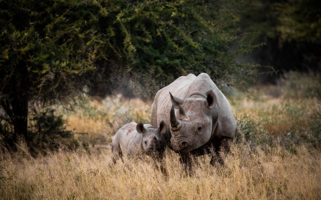 it's not (just) about the ivory
